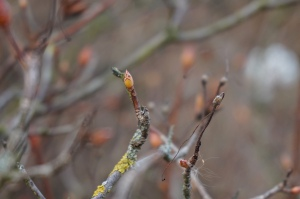 Spring bud 3